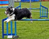 Dog Agility2.jpg