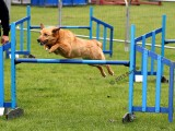 Dog Agility1.jpg