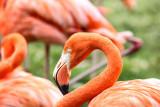 The Eye of  a Flamingo