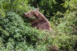 Whipsnde Animal Park