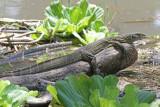 Reptiles of Kenya