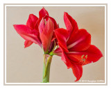 2014 Macro and Flower Photography by Douglas Griffith