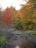 Fall Colors - unit 25