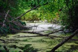 Duckweed Firetail habitat.