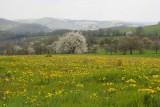 Landscapes in Spring