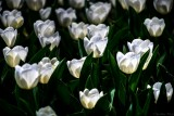 Grouped White