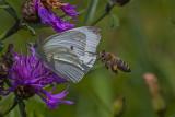 Float like a Butterfly - Sting like a Bee