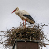 Nest on the Church Chimney