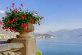 Flowers at the Villa del Balbianello