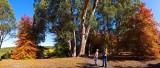 Mt Lofty Botanical Gardens