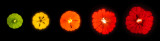 Solar System in the Galaxy of Citrus