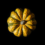 Vegetative Brain