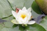 039_Kyoto_F66F5036.JPG