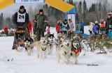 Les Internationaux de traîneau à chiens du Canada 2015