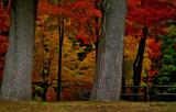 Randonnée d'automne
