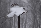 Freedom Bird on the trail with snow and ice.