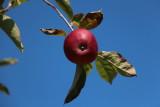 aux_pommes