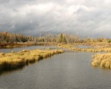 BeaverPond29.jpg