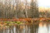 BeaverPond46.jpg