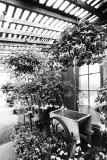 greenhouse profusion