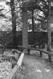 small path thru the woods
