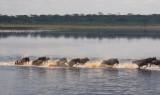 Lake Ndutu, Tanzania
