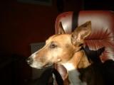 Sammy The Dog RIP