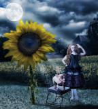 Moonflowers...
