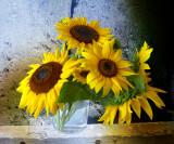 Sunflower 97
