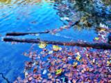 The Fairies' Pond 74