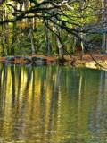 The Fairies' Pond 77