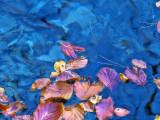 The Fairies' Pond 78