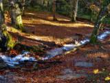 The Fairies' Pond stream