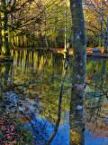 The Fairies' Pond 80