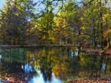 The Fairies' Pond 81
