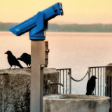 Not many people like crows...