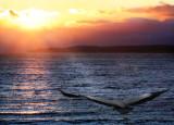 Over the lake at sunrise...