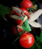 The tomatoes fairy...