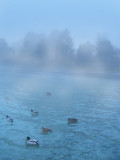 Having a good, misty swim...