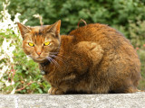 The haughty cat of Cathedral terrace...