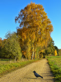 There is a harmony in autumn, and a luster in its sky....