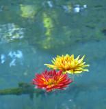 Floating away...