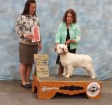 Benson  Best Puppy Group 1 Duluth 7/12