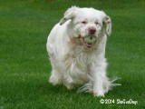 Grace's Gallery Page(s) 6 Updated 5/18/14