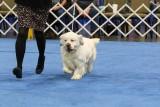 Ali Best Puppy 2015 ASC 004.jpg