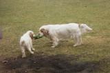 Delilah and Sierra  160310 003.jpg