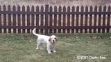 Cooper  170201 001.jpg