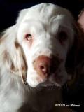 Ginger Snap  170205 001.jpg
