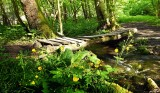 little wooden bridge
