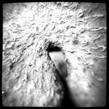 Close-up Mushroom